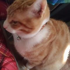買い物/筋トレ/肩こる/重い/抱っこちゃん/寝起き猫/... 最近テンとマルは 朝には布団の上に、よく…(4枚目)