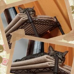 ペット前掛け/威嚇猫/子猫/野良猫/保護猫/強制慣らし中/... ドラえもんポケット~ じゃないけど  先…(2枚目)