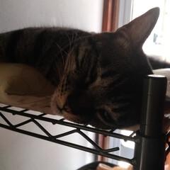 ニャンコ同好会/猫/暑い/暮らし 今日は あち~ と 汗かきながら 三度の…