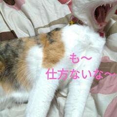 ニャンコ同好会/雨の日/猫との暮らし 雨の日☔️の 猫🐱(10枚目)