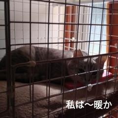 買い物/筋トレ/肩こる/重い/抱っこちゃん/寝起き猫/... 最近テンとマルは 朝には布団の上に、よく…(6枚目)