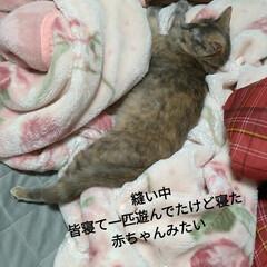 リメイク/メルカリ/手縫い/可愛い/お昼寝/4ニャンズ/... 午後は 猫衆みんなお昼寝でした🐱💤  安…(5枚目)