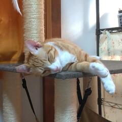 お昼寝/猫との暮らし/ニャンコ同好会/猫 午前中、近くの2000円カットの散髪行っ…