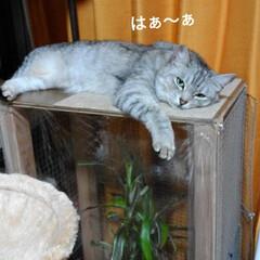 ニャンコ同好会/雨の日/猫との暮らし 雨の日☔️の 猫🐱(1枚目)