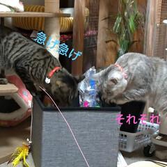 お願い/悲しい/地元サイト/子猫/野良猫/いたずら/... 昨日、放置サボちゃんの花が咲いてました✨…(7枚目)