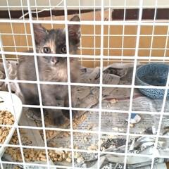 治療/保護猫/ニャンコ同好会/捕獲猫/迷い猫/捨て猫/... とりあえず目薬治療するのに お隣の空き部…