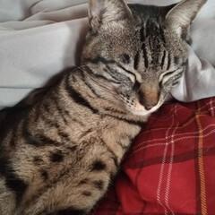 買い物/筋トレ/肩こる/重い/抱っこちゃん/寝起き猫/... 最近テンとマルは 朝には布団の上に、よく…(2枚目)