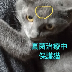 里親/東京/グレー/オカン/茶トラ/チビタ/... マルちゃん爆睡  保護猫グレーちゃん 真…(3枚目)