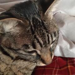 買い物/筋トレ/肩こる/重い/抱っこちゃん/寝起き猫/... 最近テンとマルは 朝には布団の上に、よく…(3枚目)
