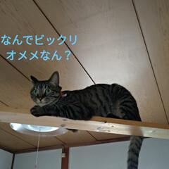 やる気無し/キャットウォーク/ニャンコ同好会/猫との暮らし/種/家庭菜園作り/... (6枚目)