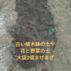 ミニ井戸/つるむらさき/オクラ/作業/家庭菜園作り/寝落ち/... おはようございます☁️  昨夜は、21時…(2枚目)