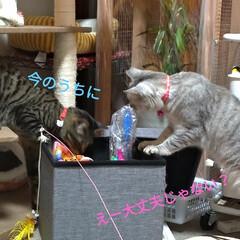 お願い/悲しい/地元サイト/子猫/野良猫/いたずら/... 昨日、放置サボちゃんの花が咲いてました✨…(6枚目)