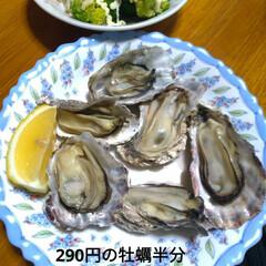 牡蠣/美味しい/タンタン麺/真菌症/病気/甘えん坊/... 今日は さむ~い よく年末これ以上の中 …(5枚目)