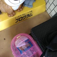 去勢手術/保護猫/キジトラ/LIMIAペット同好会/ペット/猫/... テンちゃん😸  保護して初の お外☀️ …