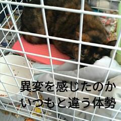 保護猫活動/バイバイ/幸せに/ありがとう/サビ猫/ニャンコ同好会/... 2021年1月10日 正午12半~1時 …