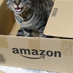 amazon段ボール/保護猫/キジトラ/LIMIAペット同好会/にゃんこ同好会/うちの子ベストショット 家の中にも 捨て猫か? テン お前も保護…