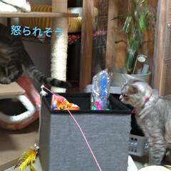 お願い/悲しい/地元サイト/子猫/野良猫/いたずら/... 昨日、放置サボちゃんの花が咲いてました✨…(5枚目)