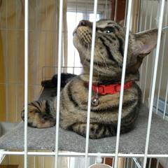 猫/可愛い/猫との暮らし/ニャンコ同好会/猫ケージ 掃除機したら テンが居ない と見渡したら…(3枚目)