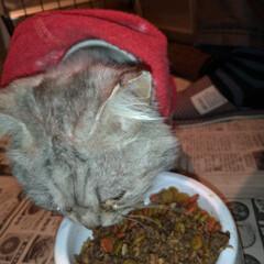 さくら猫の日/避妊手術/涙/さくらねこ/二度目手術/野良猫/... 3月22日は さくらねこの日でした🐱  …(3枚目)