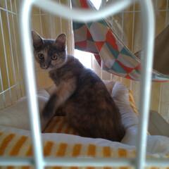 新しいベッド/昼寝/にゃんこ同好会/猫との暮らし/保護猫 チビチビちゃん 新しいベッドで寝てました…