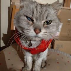 さくらねこ/二度の避妊手術/避妊手術/猫との暮らし/ニャンコ同好会/野良猫 マダニちゃんの お世話完了🐱  行くと …(1枚目)