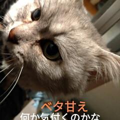 サクラカット/さくら耳猫/ご縁/可愛い/猫との暮らし/ニャンコ同好会/... 先程 マダニちゃん(テラ)のお迎えに こ…(2枚目)