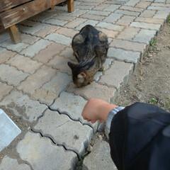 懐いてる/野良猫 マダニちゃんの事が気になるなか 昨日キジ…(2枚目)