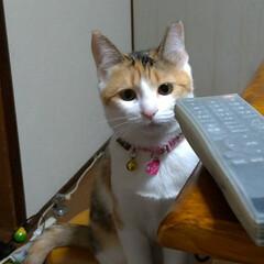 猫との暮らし/にゃんこ同好会/キジトラ/三毛猫/野良猫出身 コメント書く前にアップロードしてもうた …(4枚目)