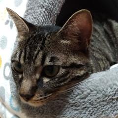 ありがとう/嬉しいね/暖かい家/ペット/猫ベッド/ホームセンター/... 今日久しぶりにパートナーさんが、抗がん剤…