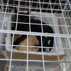 子猫/黒猫/多頭飼う/保護猫/捨て猫/捕獲器/... 日曜日の 朝に 業者の人達と 話をしなが…(3枚目)