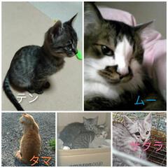サクラカット/地域猫/避妊手術/どうぶつ基金/保護猫活動支援/悲しい終わりに終わりを/... 中学の時から 沢山の猫と出会い飼い 家を…