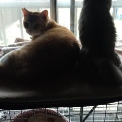 猫のいる暮らし/ニャンコ同好会/猫ケージ/ダイソー/100均/DIY/... 最近ダイソー猫ケージを移動して マルとサ…