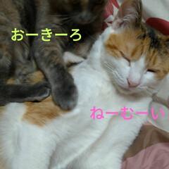 ニャンコ同好会/雨の日/猫との暮らし 雨の日☔️の 猫🐱(8枚目)