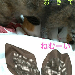 ニャンコ同好会/雨の日/猫との暮らし 雨の日☔️の 猫🐱(7枚目)