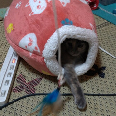 猫との暮らし/ニャンコ同好会/保護猫/野良/ヤドカリ/猫釣り/... 昨日深夜 エイリアンの卵から チビチビが…