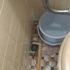 修理/トイレ/リフォーム/掃除 本日は 隣のバッチイトイレの タンクの中…