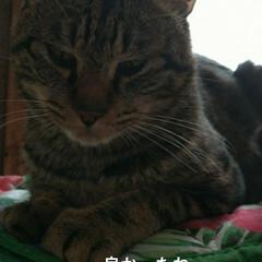 幸せに暮らしています/野良猫から飼い猫へ/ありがとう/里親さん/アメショー系/さくら耳/... 野良保護猫 そらくん 里親さんの お家で…(6枚目)