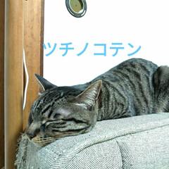 サビ猫/サバトラ/キジトラ/猫との暮らし/ニャンコ同好会 昨夜の テン チロ サクラ😍(2枚目)