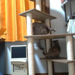 サビ猫/サバトラ/キジトラ/脱走/ニャンコ同好会/猫との暮らし/... メルカリで先日買ったキャットタワー テン…(6枚目)
