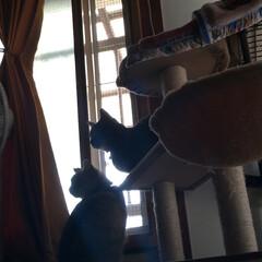 猫の日/TNR/トートバック/猫との暮らし/にゃんこ同好会/野良猫/... 昨日、どうぶつ基金さんから ねこの日に応…(5枚目)