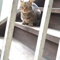懐いてる/野良猫 マダニちゃんの事が気になるなか 昨日キジ…(1枚目)