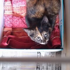 保護猫/野良猫 保護猫ちゃん、生きてたので、掃除して他ケ…