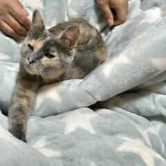 ニャンコ同好会/猫との暮らし/晩ご飯/おでん 昨日夜から作った おでん🍢  今日の昼も…(2枚目)