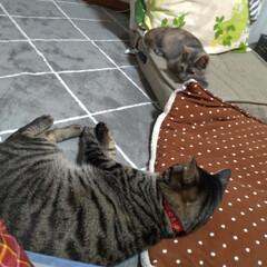 保護猫/野良猫/先住猫/猫の居る暮らし もう慣れてきたかな~  テンも 安心だよ…(2枚目)