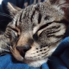 保護猫/キジトラ/ペット/猫/にゃんこ同好会 キリッと顔テンちゃん(*⌒▽⌒*) から…(3枚目)
