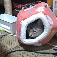 治療/耳ダニ/寄生虫/保護猫/子猫/ニャンコ同好会/... おはようございまーす  先日メル○リで購…(2枚目)