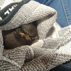 保護鳥/餌セット/出会い/ムクドリ/令和の一枚/暮らし/... 昼ご飯食べました🐤  保護鳥 ご飯道具セ…