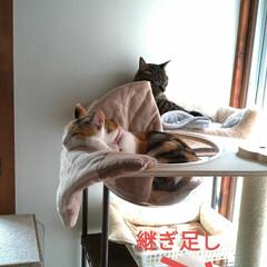 猫オモチャ/猫との暮らし/キャットタワー合体/キャットタワー部品/爪とぎ/キャットタワー/... オモチャで密かに遊んでたサクラに カメラ…(8枚目)