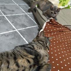 保護猫/野良猫/先住猫/猫の居る暮らし もう慣れてきたかな~  テンも 安心だよ…(3枚目)