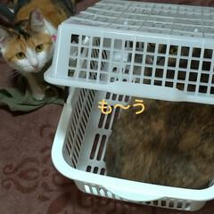 猫ベッド/消えた猫/くたびれもうけ/ニャンコ同好会/猫との暮らし/カゴ/... 今日は、換気扇2つ洗い 換気扇周り拭いた…(6枚目)